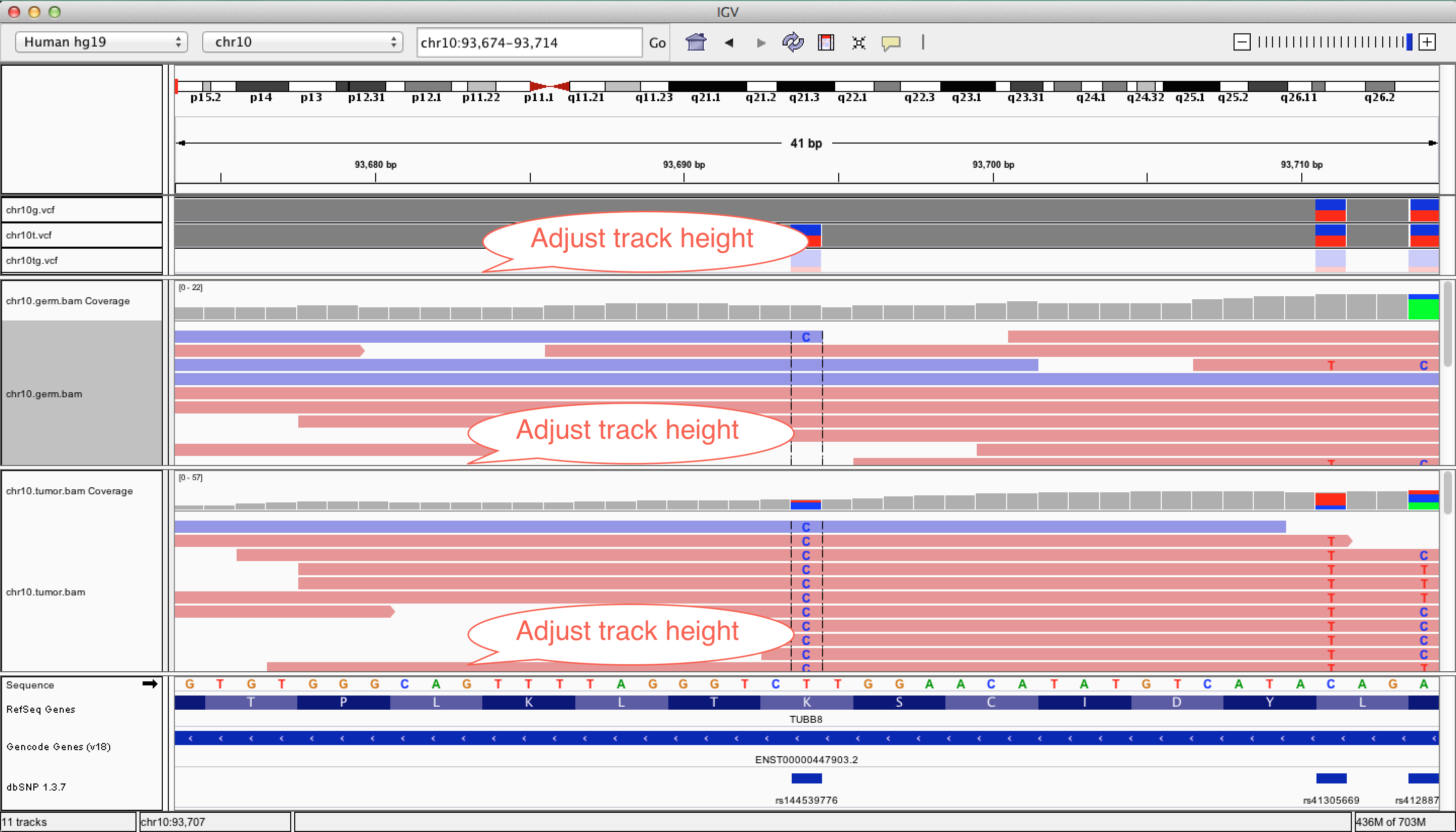 Adjust The Height Of Each Of The Tracks To Fit All Of The Annotations From  The Bottom Track On The Screen  You Will See This Is An Annotated Snp In  Dbsnp